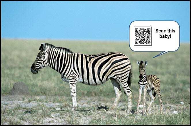 QR Codes at the Zoo!