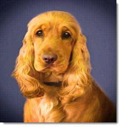 Lost Dog qr codes