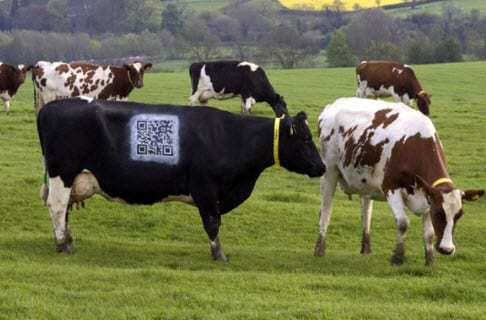 QR Code advantages Cow