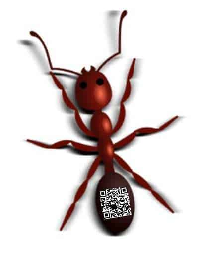 QR codes on ants