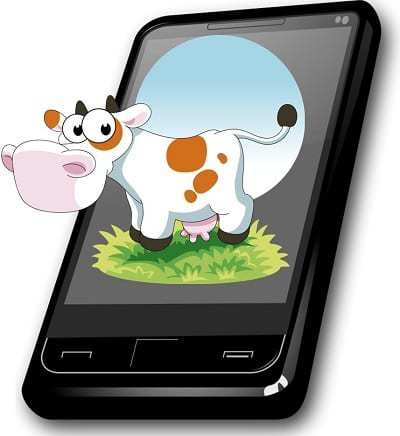 Cow wearable technology