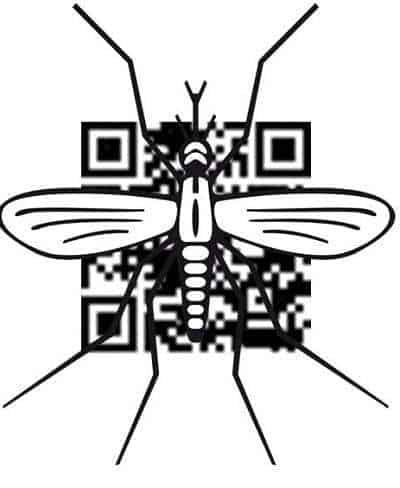 dengue qr codes mosquito