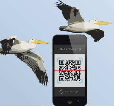 pelican island QR codes