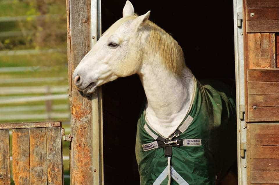 Athletic wearable technology is now available for horses