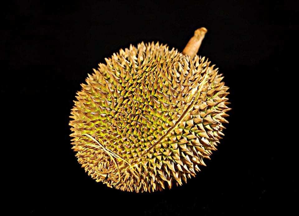 durian qr codes