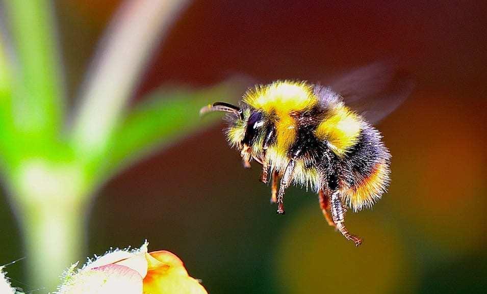 QR Code Bees - Image of Bumblebee in flight