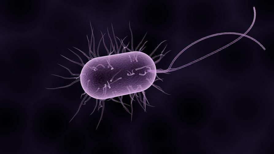 Dirty smartphones - Bacteria