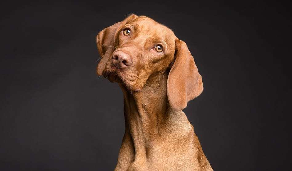 Veterinary VR tech - Dog
