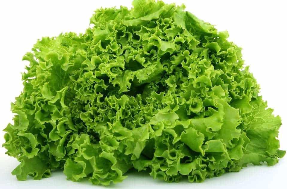 Lettuce - qr code food tracing