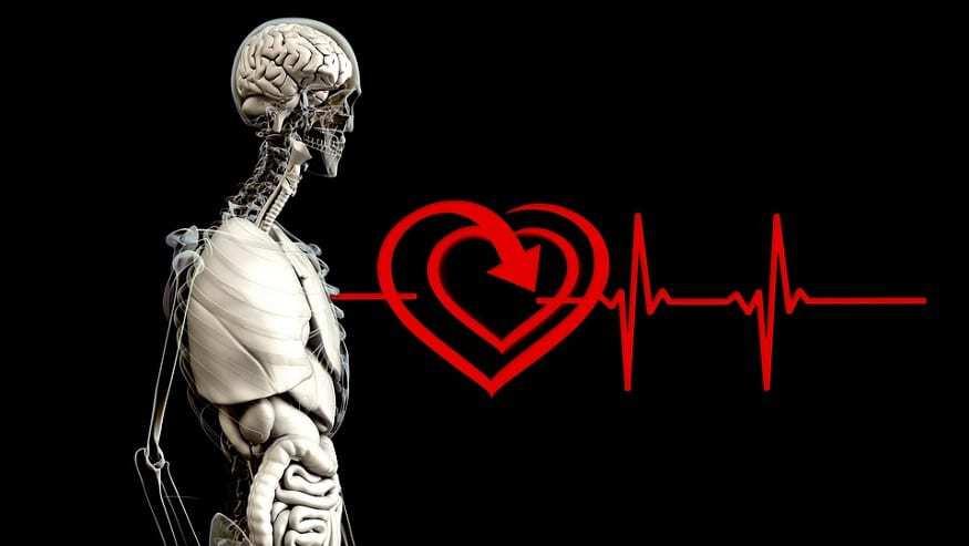 Apple wearable tech - Heart monitor
