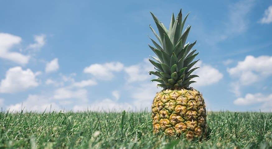 QR code food tracking - Pineapple in grass field