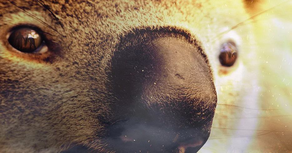 Australian Wildfire Support - Koala