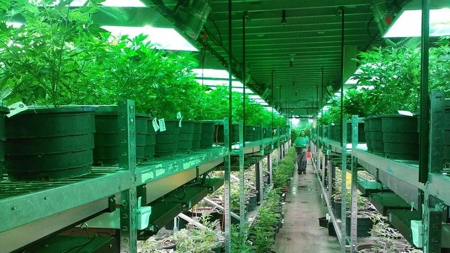 QR Code Verification - Cannabis dispensary