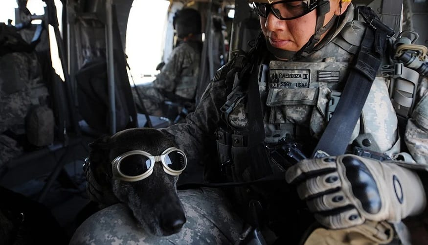 Augmented reality goggles - dog wearing goggles - military