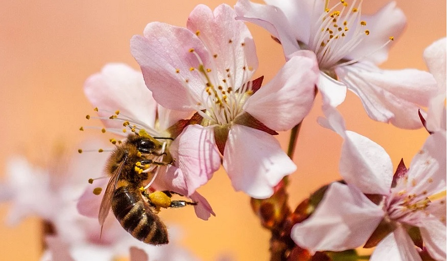 QR codes - bee pollinating flowers